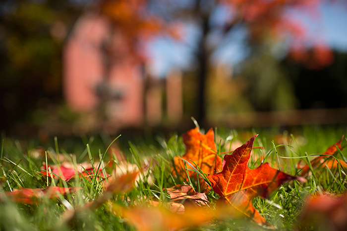autumn leaves in grass